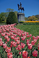 Tulips in front of the statue of George Washington in Boston's Public Garden. Boston, Massachusetts.