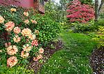Vashon-Maury Island, WA: Perennial garden featuring  Japanese maple, and rhododendron