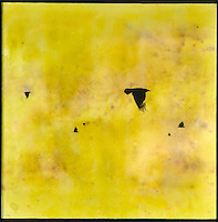 Mixed media encaustic photo painting of crow in cadmium yellow sky.