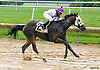 Persie winning at Delaware Park on 6/17/17