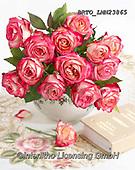 Alfredo, FLOWERS, BLUMEN, FLORES, photos+++++,BRTOLMN23865,#f#, EVERYDAY ,rose,roses