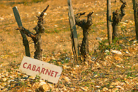 Cabernet Sauvignon misspelled Cabarnet vines in a row and a sign at La Truffe de Ventoux truffle farm, Vaucluse, Rhone, Provence, France