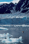 Alaska, Kenai Fjords, Kayaker (male) paddles from Pederson Glacier  through icebergs toward camera, Peterson Lagoon, Aialik Bay, Kenai Fjords, Kenai Fjords National  Alaska, North America, USA..