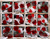 Interlitho-Alberto, FLOWERS, BLUMEN, FLORES, photos+++++,roses red,KL16543,#f#, EVERYDAY