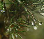 2016 Water_drops_plants_trees