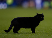2nd February 2019, Goodison Park, Liverpool, England; EPL Premier League Football, Everton versus Wolverhampton Wanderers; A black cat runs across the pitch in the second half but brings only bad luck to Everton today