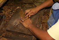 Close up of a woman's hands rolling a cigar in the Tabacalera Alberto Turrent  cigar factory near San Andres Tuxtla, Veracruz, Mexico                    .