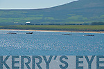 Action photo at ventry regatta on Sunday