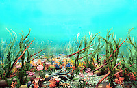Ancient Ordovician Ocean