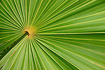 palm fronds, Mayan Riviera, Mexico, abstract
