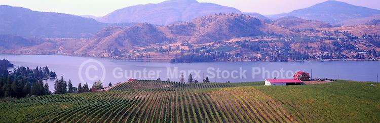 Vineyards at Skaha Lake near Okanagan Falls, South Okanagan Valley, BC, British Columbia, Canada - Panoramic View