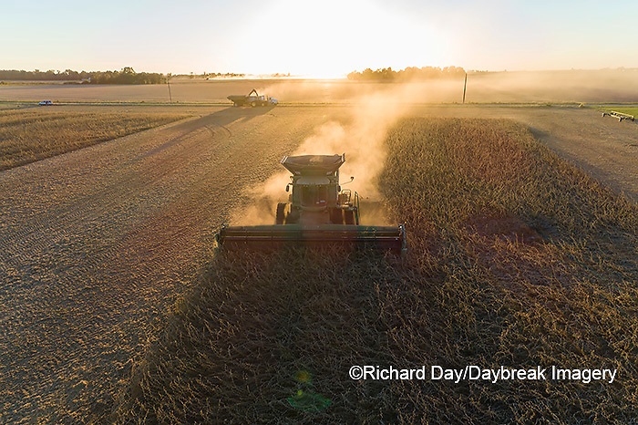 63801-13319 Harvesting soybeans at sunset in fall-aerial  Marion Co. IL