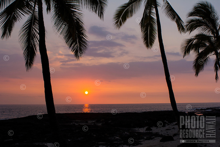 A colorful sunset with coconut trees along the Kona Coast, Big Island.