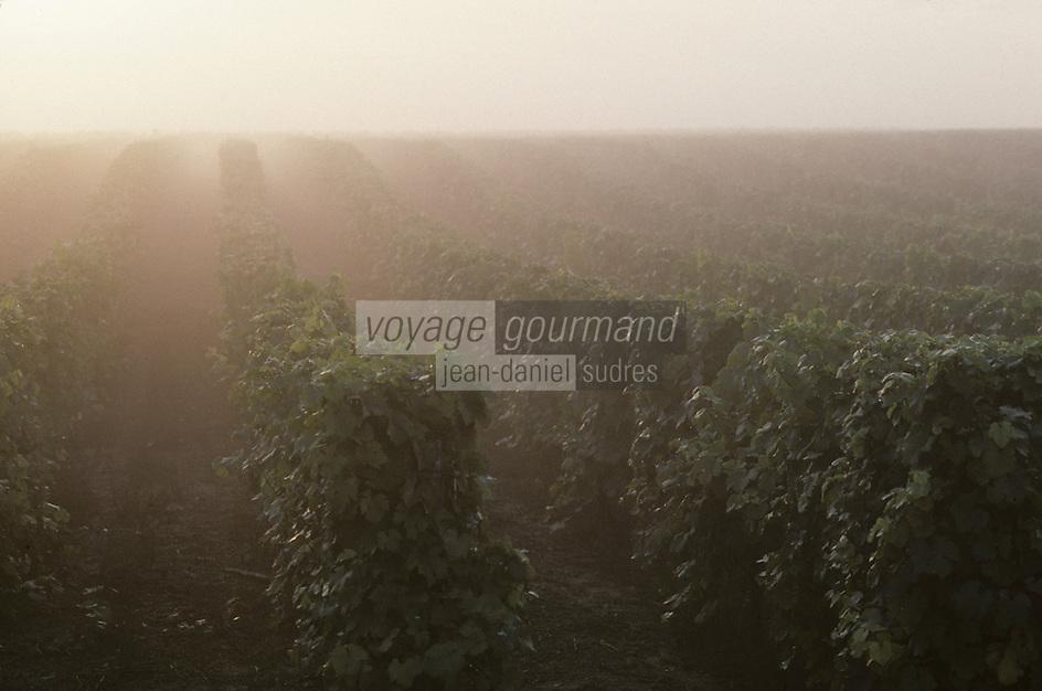 Europe/France/Pays de la Loire/Maine-et-Loire/Turquant : AOC Saumur-Champigny, le vignoble