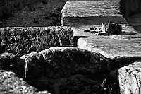 Un gatto si pulisce il pelo disteso tra le pietre dell'anfiteatro di Lecce.