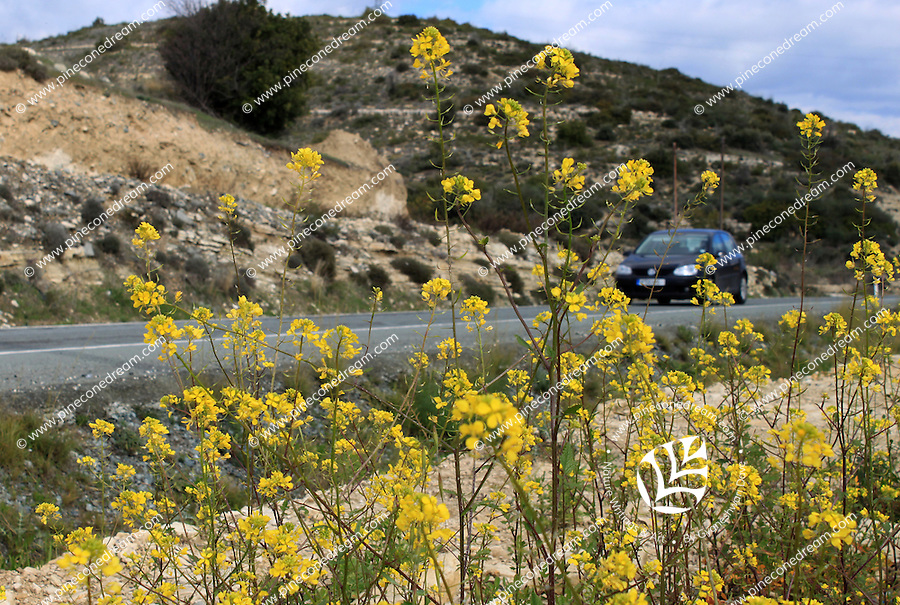 Stock image -Car passing through a high-way in Cyprus with wild yellow flowers in foreground.