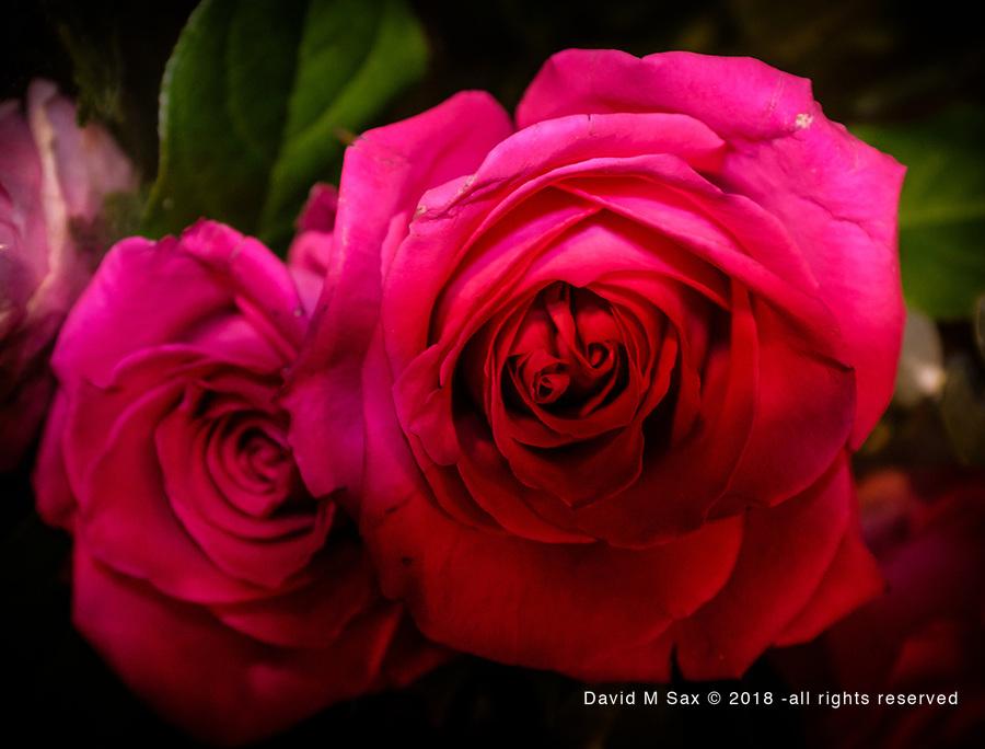 12.12.17 - Rose Bouquet...