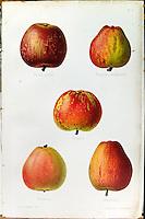 Bibliotheque - livre imprime en couleur vers 1870