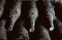 France/Bourgogne/Côte d'Or/Beaune: Cave de la Reine Pedauque - Détail vieilles bouteilles d'AOC Grand Cru - Vieille bouteille de vin recouvertes de poussière