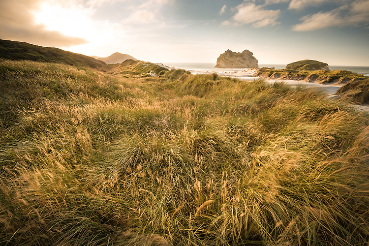 Grass covered sand dunes of Wharariki beach with Archway Islands in the background. West Coast New Zealand - photo, canvas, fine art print