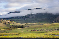 Yellowstone National Park, Lamar Valley, Elk