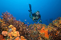 Sam diving at Seamount.St. Croix.U.S. Virgin Islands