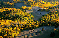 Aspen near Westcliffe Colorado