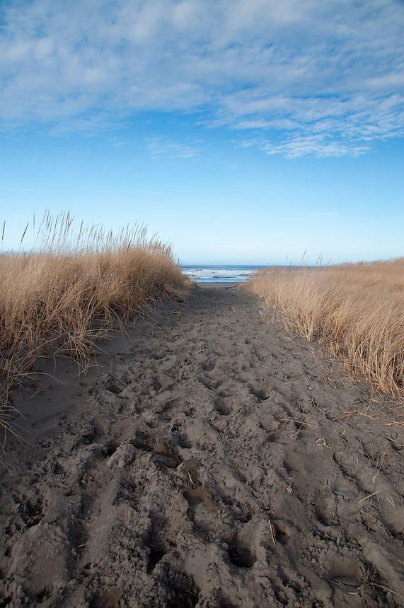 Path Through Dunes to Beach at Loomis Lake State Park, Long Beach, Washington, US