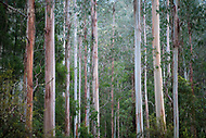 Image Ref: CA573<br /> Location: Lake Elizabeth, Forrest<br /> Date of Shot: 20.10.18