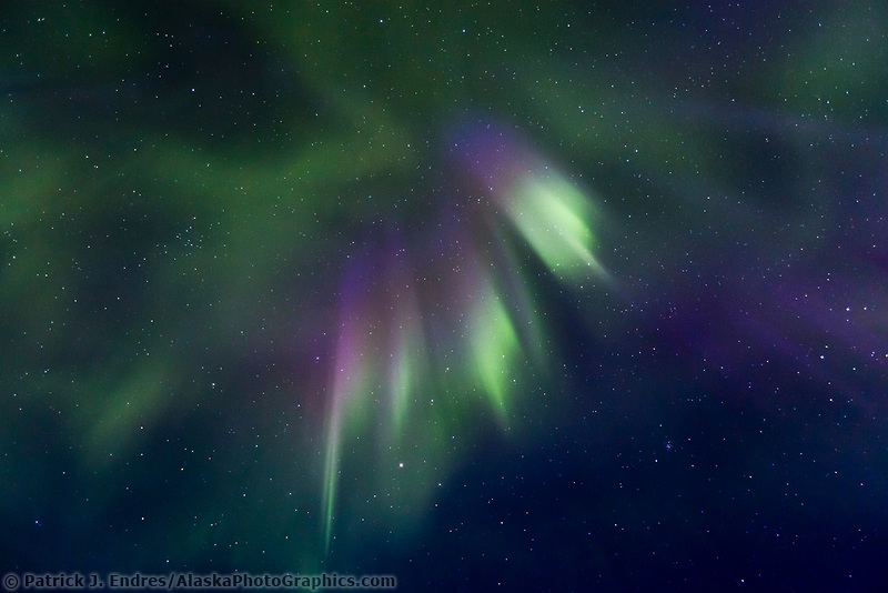 Purple and green bands of aurora borealis in the star filled sky of interior Alaska.