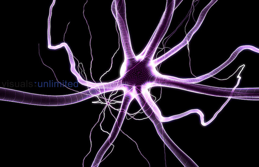 A microscopic view of a neurons and its processes. Royalty Free