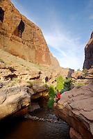 Secret desert oasis, South East Utah,