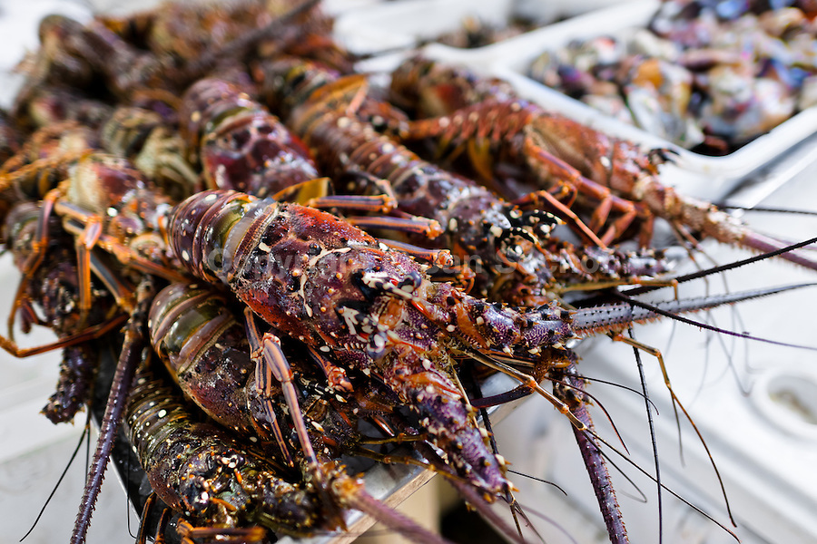 Fresh lobsters for sale are seen at Mercado de Mariscos seafood and fish market in Panama City, Panama, 1 February 2015.