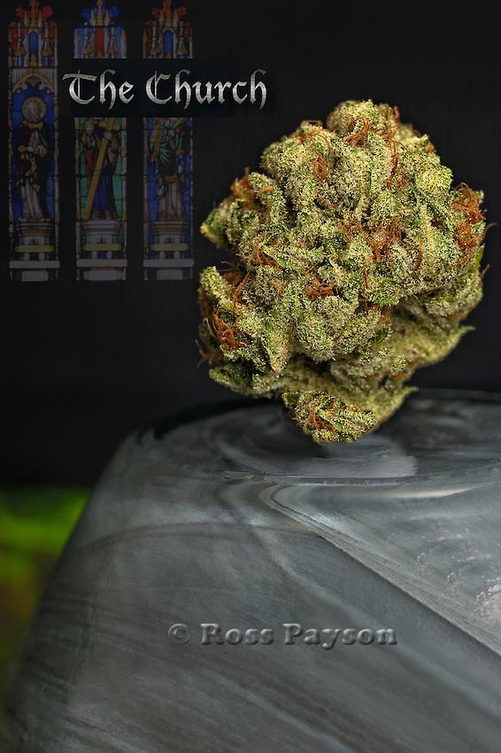 The Church nug photo - the best fine art cannabis photography on the web