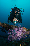 DM Bobby @Marco Vincent with purple whip coral, Marco Vincent, Philippines, Puerta Galera, Verde Islands