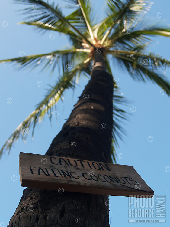"A sign reading ""Caution Falling Coconuts"" is posted on a palm tree with no coconuts."