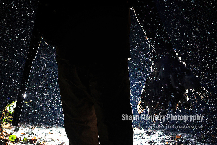 Pix: Shaun Flannery/shaunflanneryphotography.com...COPYRIGHT PICTURE>>SHAUN FLANNERY>01302-570814>>07778315553>>..4th February 2012……………..A gamekeeper with a 20 bore shotgun walks through a snow storm in the dark with a clutch of dead pigeons.