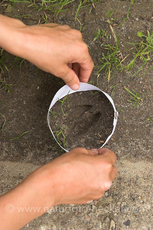 Kinder gießen Tierspur aus Gips, Junge stülpt Ring aus Karton über das Trittsiegel, die Fußspur von einem Reh