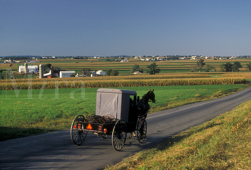 AJ3051, horse and buggy, Amish, Amish country, Lancaster County, Pennsylvania, Pennsylvania Dutch Country, An Amish horse and buggy trot down a country road through the picturesque countryside of Lancaster County in the state of Pennsylvania.