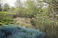 Mixed grass groundcovers in urban park landscape design meadow garden, Jeffrey Open Space, Irvine California