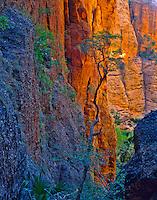 Inside MiniPalms Gorge, Purnululu National Park, Western Australia    Bungle Bungle Range