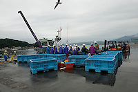 Japanese fisherman processing seafood at Miyako Bay during reconstruction efforts following the 311 Tohoku Tsunami in Miyako, Japan  © LAN