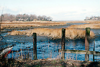WETLANDS<br /> Salt marsh<br /> Udells Cove, Little Neck, NY