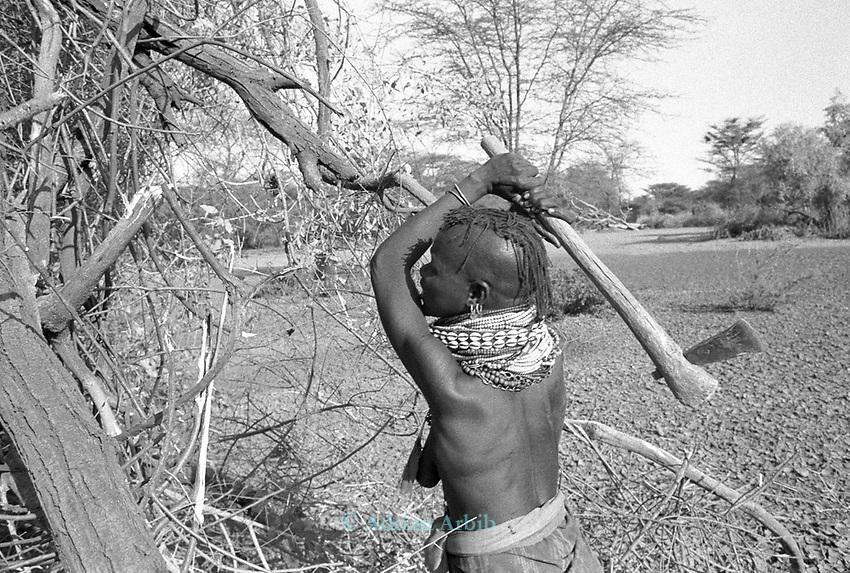 A Turkana woman chops of some branches from a thorn tree, which she will use as a pen for her herd of sheep and goats. <br /> Nr Kakuma. Northern Kenya.