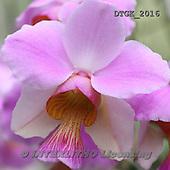 Gisela, FLOWERS, BLUMEN, FLORES, photos+++++,DTGK2016,#f#