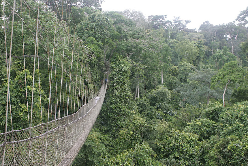Tree canopy rope walk, Kakum National Park, Ghana..Photograph by Peter E. Randall