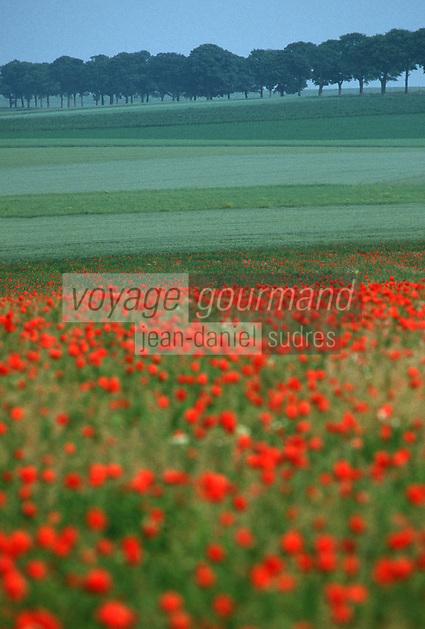 Europe/France/Champagne-Ardenne/51/Marne/Parc Naturel Montagne de Reims/Env de Reims: Les champs et les coquelicots