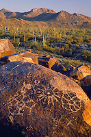 Petroglyphs on Signal Hill and saguaros <br />