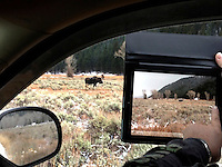 Tourist photographing a moose with an Ipad, Grand Teton National Park