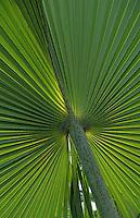 """Océanie/Australie/Queensland/Env. de Mossman: Palmiers au """"Botanical Ark"""""""